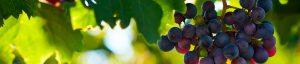 Carta de Añadas vino Rioja, información sobre los vinos de Rioja
