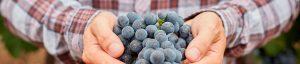 Blog de Bodegas Zintzo en Rioja Alavesa