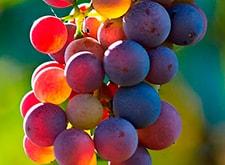 Añadas vino Rioja
