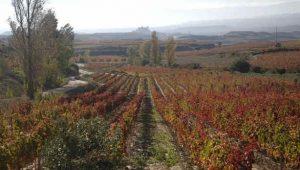 Qué hace tan especial el vino de la Rioja Alavesa