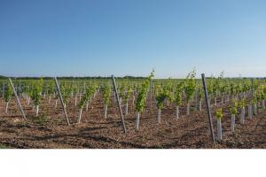 vendimia en la Rioja Alavesa