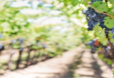 Enoturimo en la Rioja Alavesa Bodegas Zintzo vino rioja