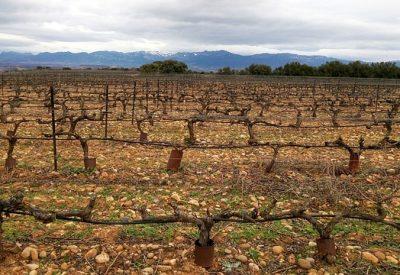 poda de las viñas en rioja alavesa